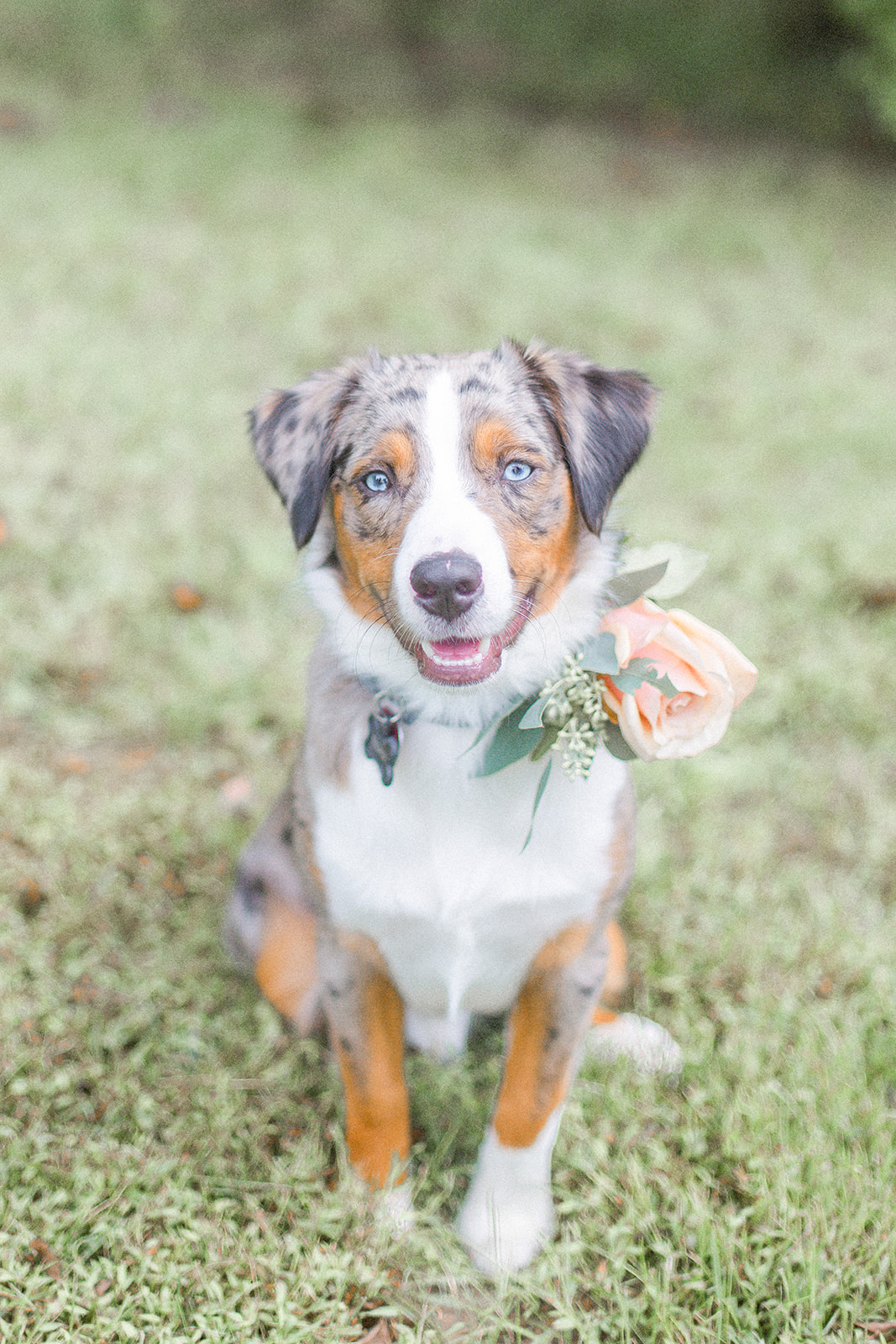 THE CUTEST RING BEARER THERE EVER WAS FOR AN AUTUMN INSPIRED INTIMATE WEDDING - KEVIN & ALY PHOTOGRAPHY